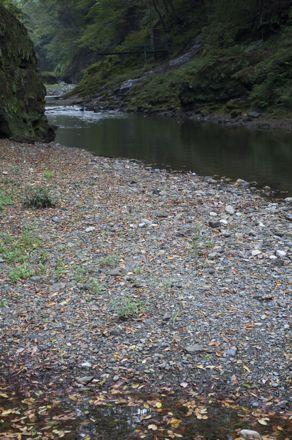 横瀬川 河原.jpg