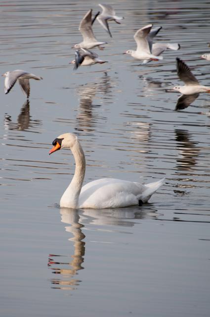 水鳥06.jpg