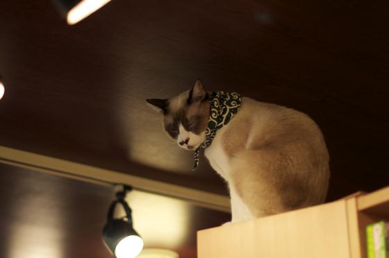 泥棒猫、観念する.jpg