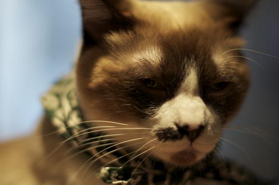 泥棒猫近影.jpg