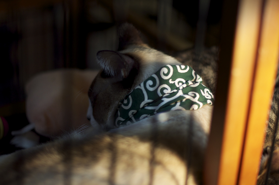 獄中の泥棒猫.jpg