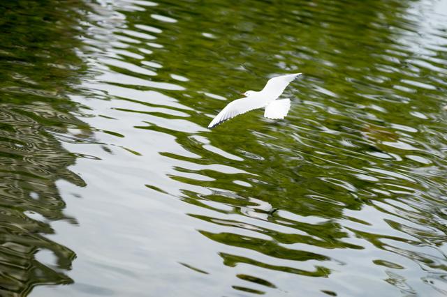 白鳥庭園15.jpg
