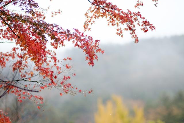 紅葉-3.jpg
