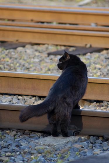 那珂湊駅の猫.jpg
