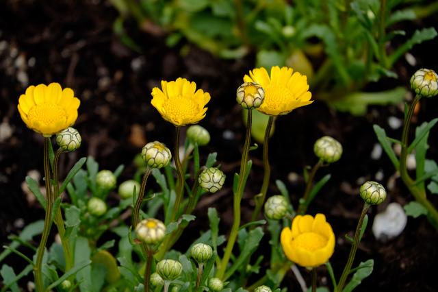 Wild Flower Garden.jpg