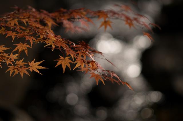 fuyuno hikari art 04.jpg