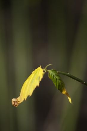 14 Leaves.jpg