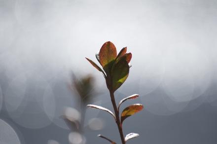 16 Leaves.jpg