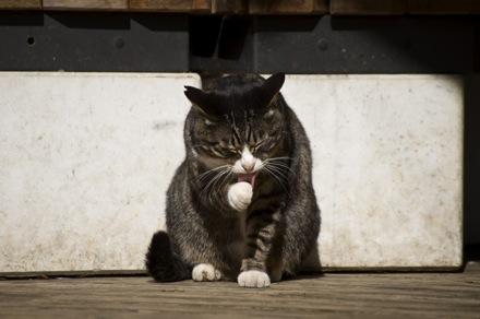 22 猫.jpg