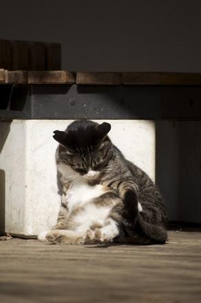 24 猫.jpg