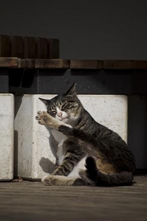 27 猫.jpg