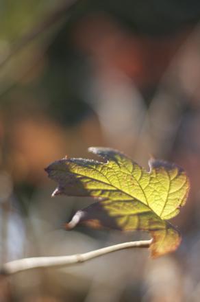 30 Leaf.jpg