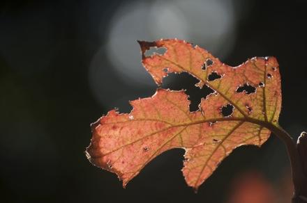 31 Leaves.jpg