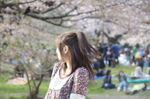 代々木桜10.jpg