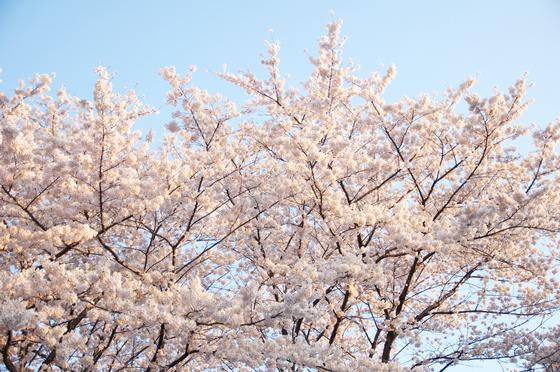 飛鳥山公園 1.jpg