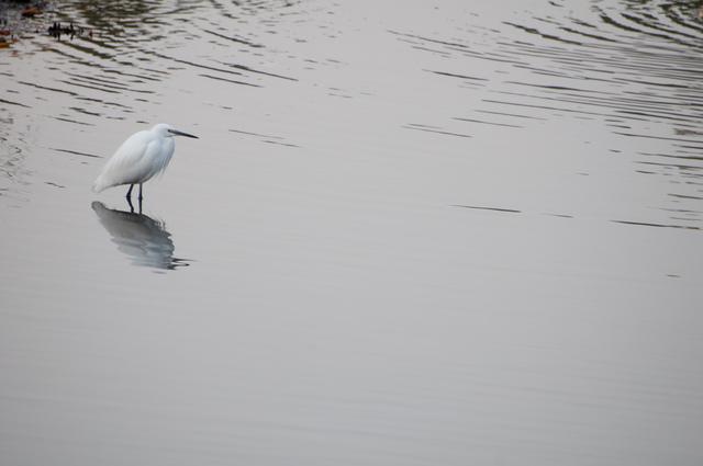 水鳥03.jpg