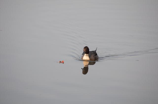 水鳥04.jpg