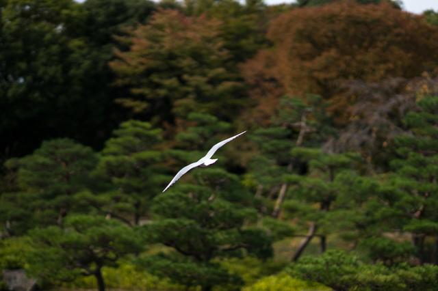 白鳥庭園11.jpg