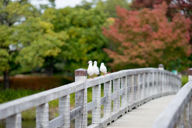 白鳥庭園13.jpg