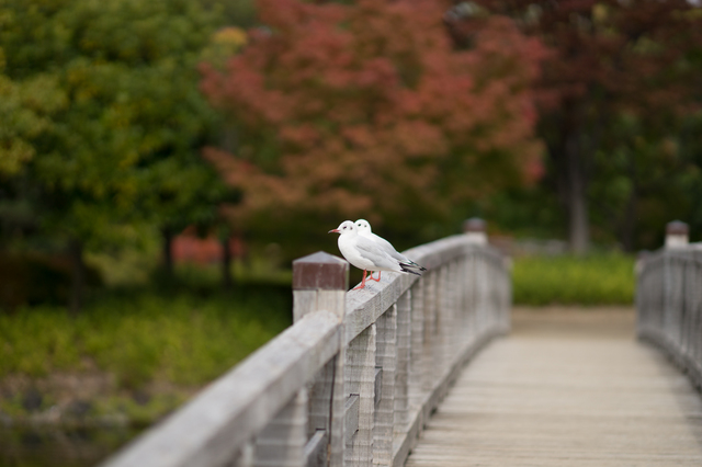 白鳥庭園14.jpg