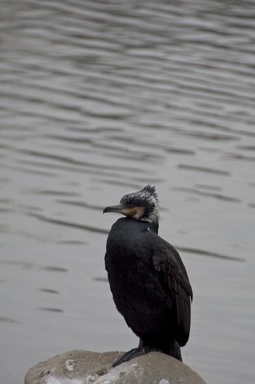 黒っぽい鳥.jpg