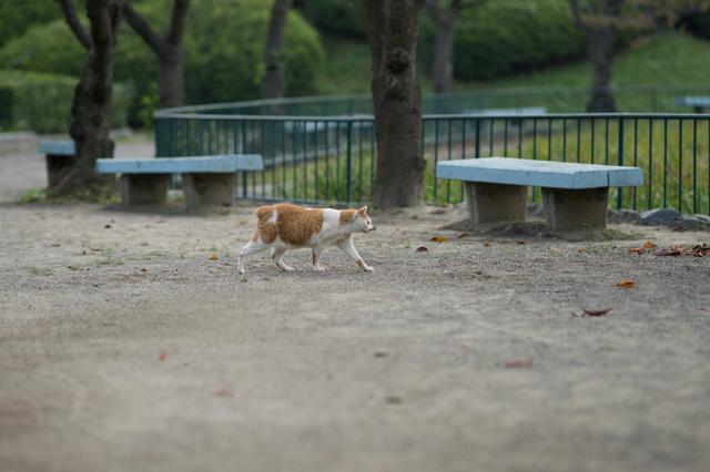 Park04.jpg