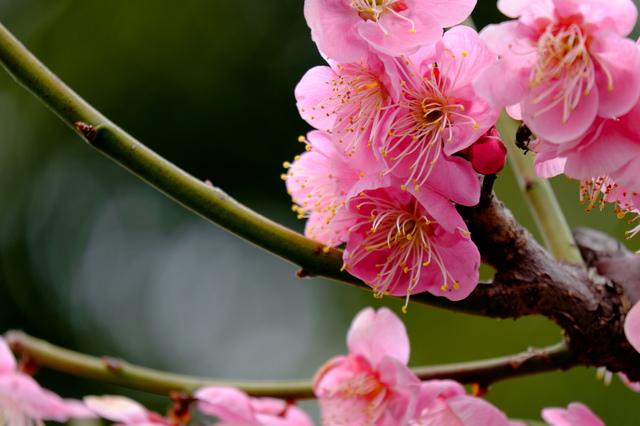 Wild Flower Garden_13.jpg