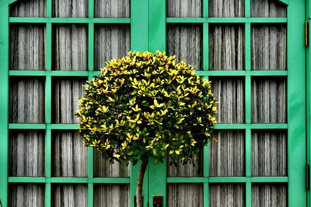 Wild Flower Garden_3.jpg