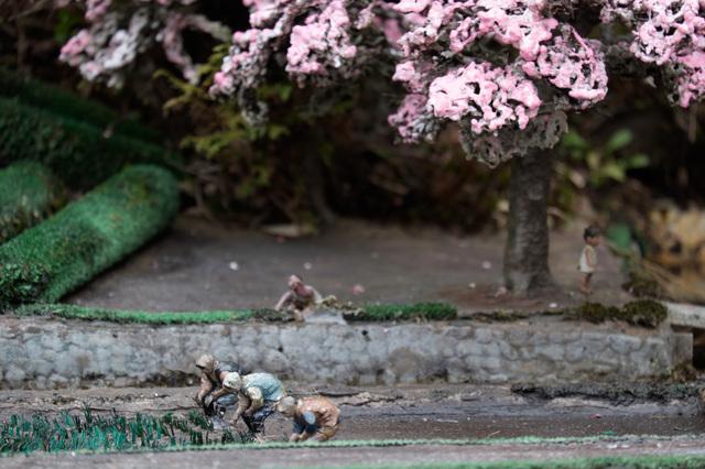 Wild Flower Garden_6.jpg