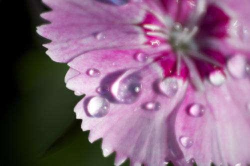 flower Close-up S.jpg