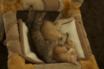 2匹とも眠っています。足が・・・。